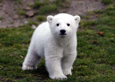 knut-the-polar-bear-berlin-zoo-4-07.jpg