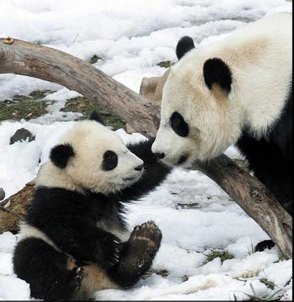 panda_kid.jpg