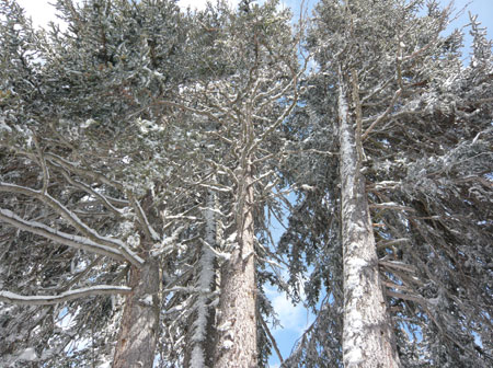 cranstrees.jpg