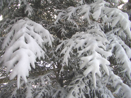 snoworiginal.jpg